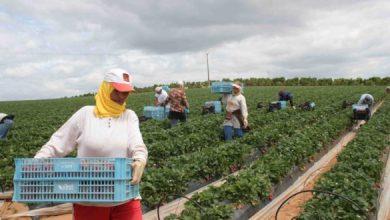 Photo of قسنطينة / إنشاء 31 مشروعا فلاحيا من طرف نساء