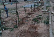 Photo of ام البواقي/ شباب وسكان حي 404 مسكن ببلدية ببئر الشهداء يقومون بحملة تطوع لغرس الاشجار.