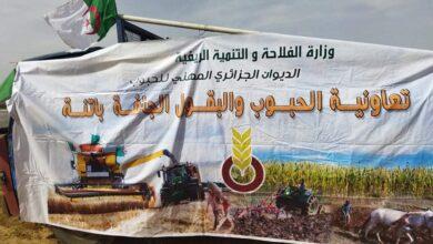 صورة باتنة / انطلاق حملة الحصاد والدرس بولاية باتنة