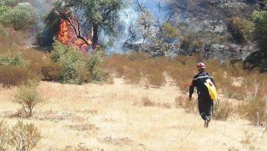 صورة قسنطينة / الحرائق تلتهم 3 هكتارات من الحصائد و4 هكتارات من الأحراش و 48 خلية نحل و16 شجرة  خلال 24 ساعة الأخيرة