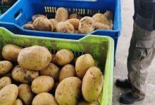 صورة الطارف / مجمع كعواش الفلاحي يفتح غرف التبريد لتزويد الولاية بمادة البطاطا