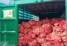 صورة سكيكدة /إنطلاق عملية بيع البطاطا من المنتج إلى المستهلك مباشرة بسعر 50دج بسكيكدة